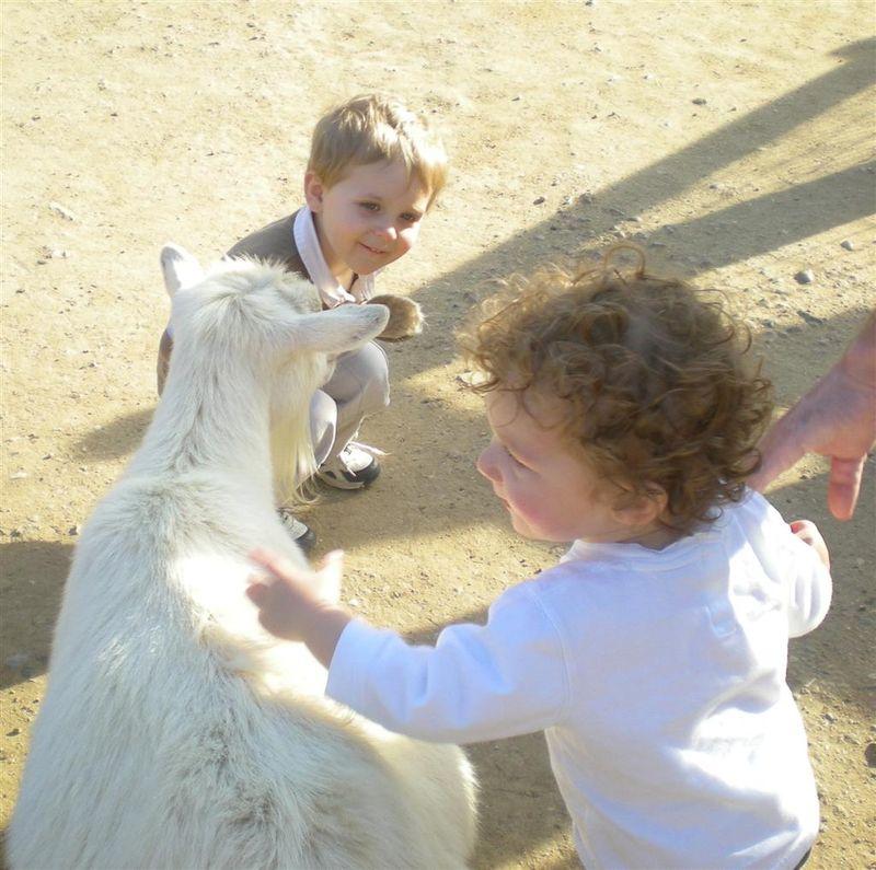 Petting Zoo Crop (Large)