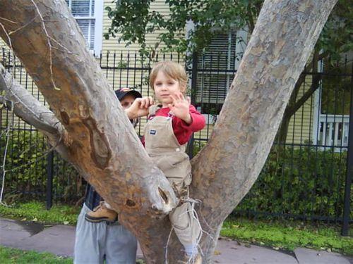 Trees (Large)
