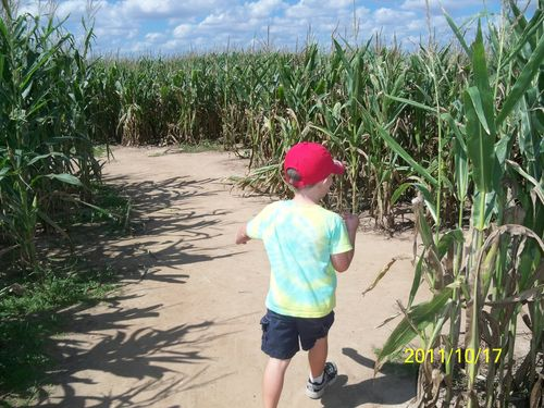 Dewberry Farm Corn Maze