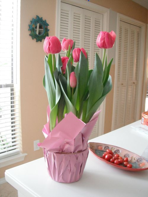 Tulips Smaller