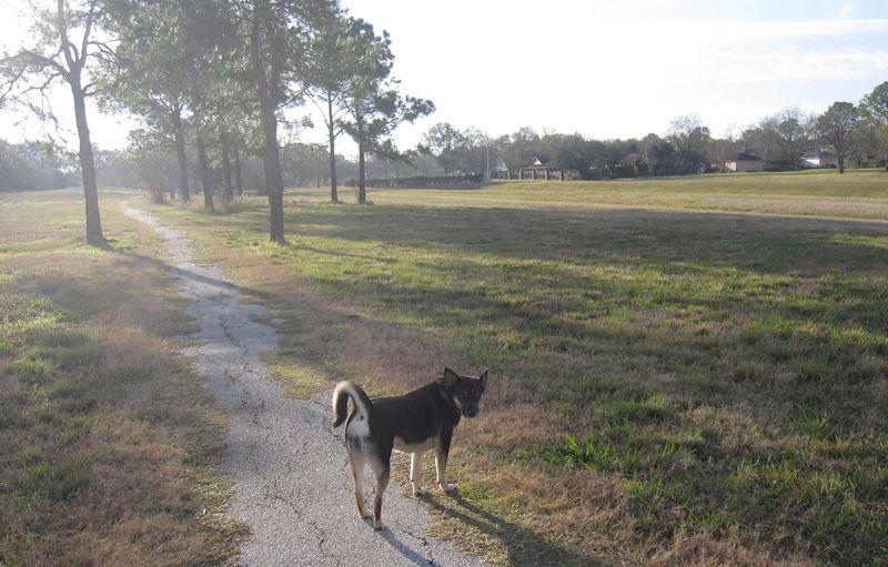 Lyra on the Walk